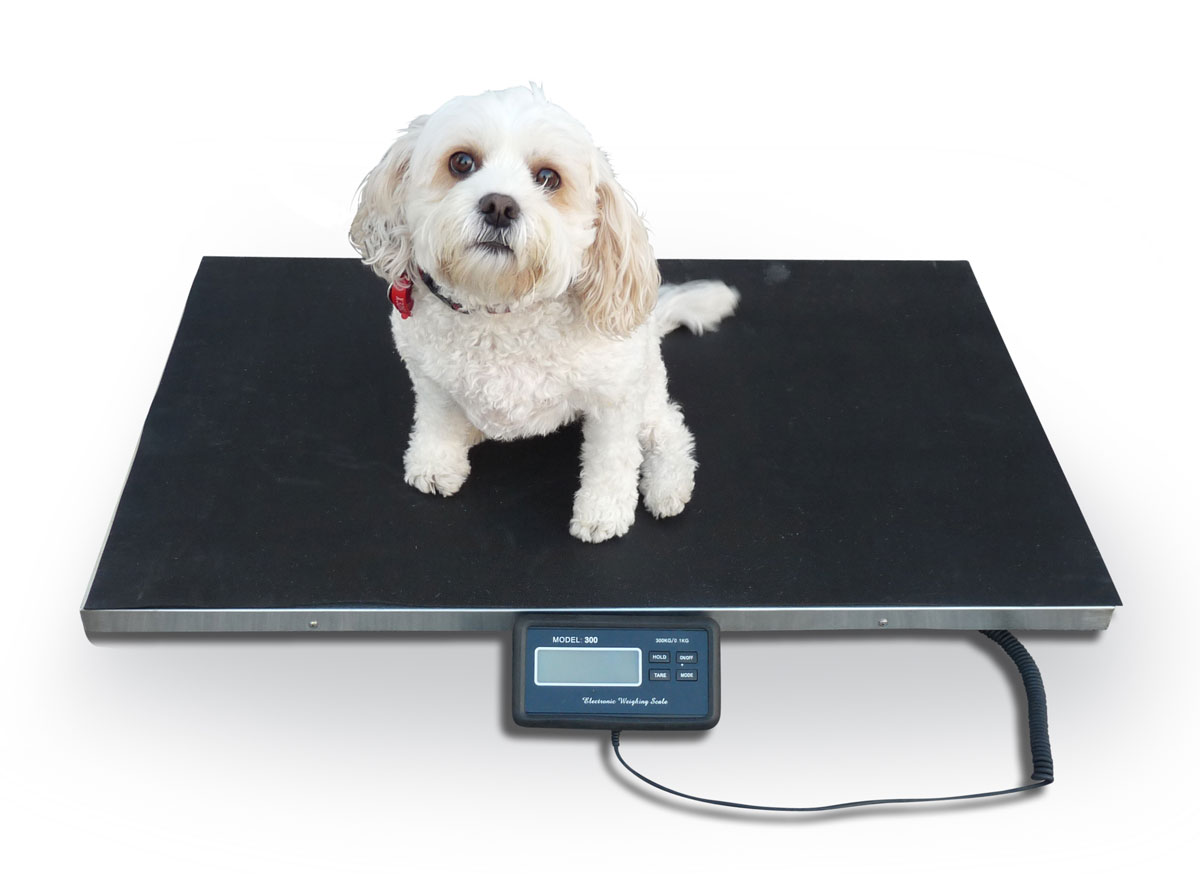 Veterinary Scales Large Www Geckooptical Com